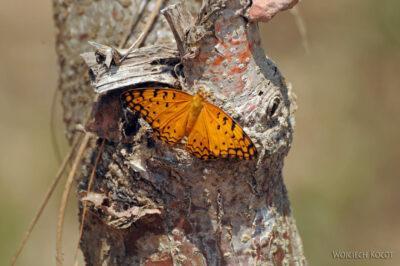 Ma15082-Motyl