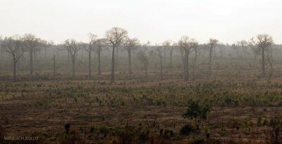 Ma15116-Baobaby