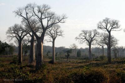 Ma15117-Baobaby