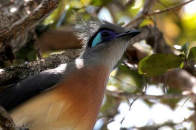 Ma17042-Tsingy - ładny ptaszek
