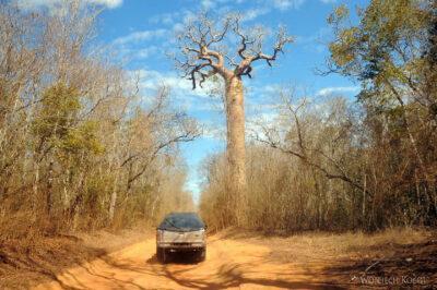 Ma18043-Droga wśród Baobabów