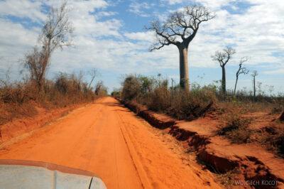 Ma18045-Droga wśród Baobabów