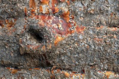 Ma18055-Kora Baobaba