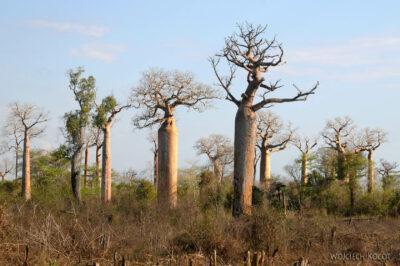 Ma18067-Baobaby