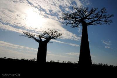 Ma18075-Baobaby