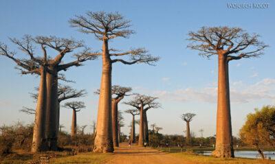 Ma18087-Baobaby