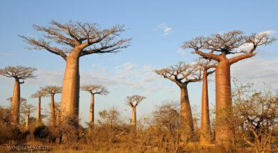 Ma18088-Baobaby