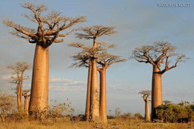 Ma18089-Baobaby