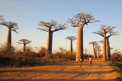 Ma18097-Baobaby
