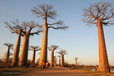 Ma18098-Baobaby
