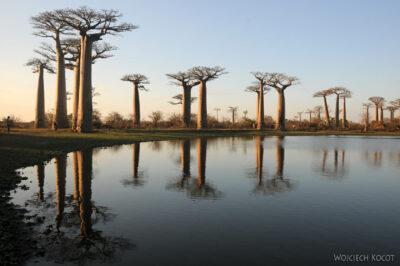 Ma18105-Baobaby