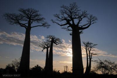 Ma18107-Baobaby