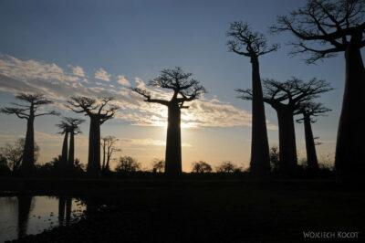 Ma18108-Baobaby