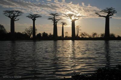 Ma18109-Baobaby