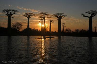 Ma18111-Baobaby ozachodzie słońca