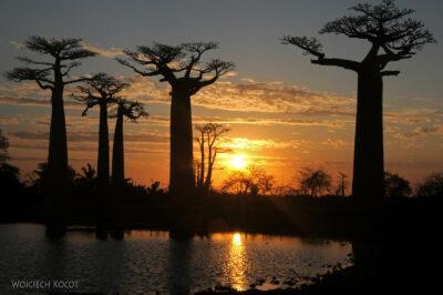 Ma18113-Baobaby ozachodzie słońca