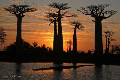 Ma18118-Baobaby ozachodzie słońca