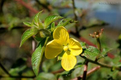 Ma29029-Kwiatuchy