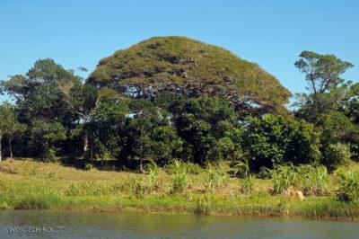 Ma29034-Roślinność podrodze