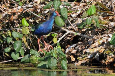 Ma30014-Niebieski ptak