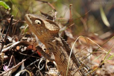 Ma11059-Kameleon