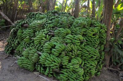 Ma24064-Banany - dużo