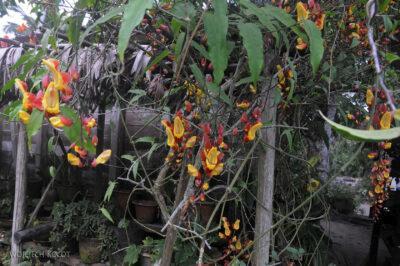 Ma25078-Kwiatuchy wMananjary