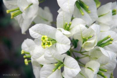 Ma25092-Kwiatuchy wMananjary