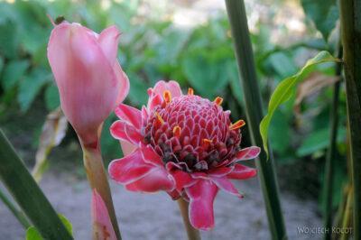 Ma25095-Kwiatuchy wMananjary