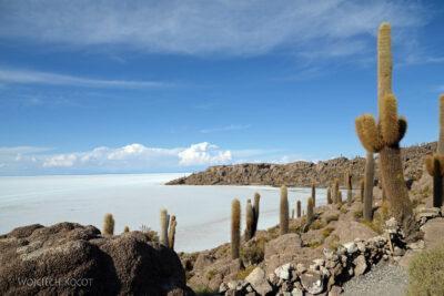 PBj086-Uyuni - wyspa kaktusów