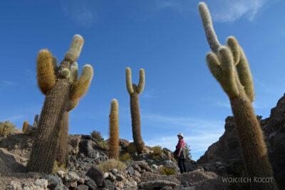 PBj090-Uyuni - wyspa kaktusów