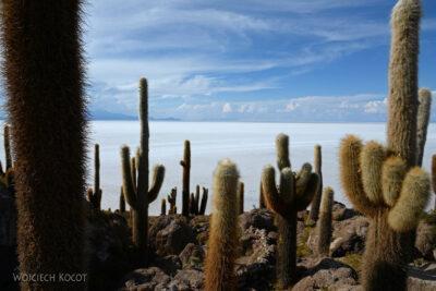 PBj098-Uyuni - wyspa kaktusów