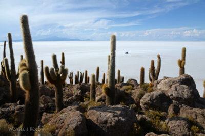 PBj099-Uyuni - wyspa kaktusów