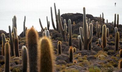PBj105-Uyuni - wyspa kaktusów