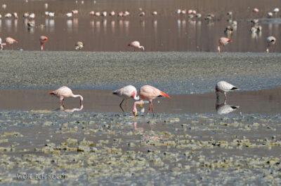 PBk074-przy Laguna Chiar Kkota