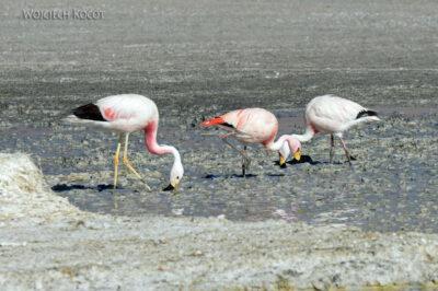 PBk075-przy Laguna Chiar Kkota