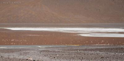 PBl010-Przy Laguna Colorada