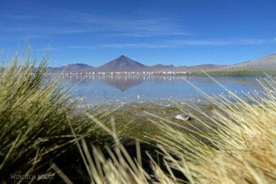 PBl023-Przy Laguna Colorada