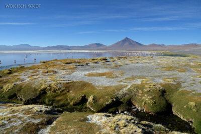 PBl025-Przy Laguna Colorada