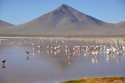 PBl026-Przy Laguna Colorada