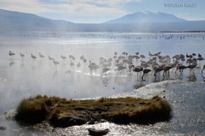 PBl033-Przy Laguna Colorada