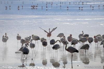 PBl037-Przy Laguna Colorada