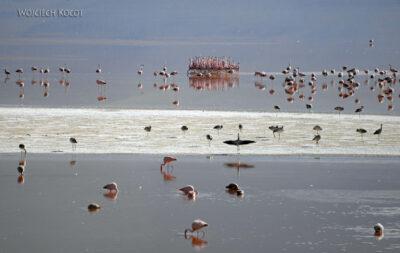 PBl041-Przy Laguna Colorada