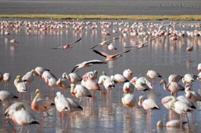 PBl046-Przy Laguna Colorada