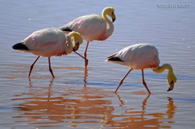 PBl054-Przy Laguna Colorada