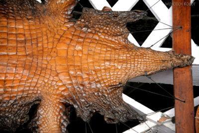 p155-Livingstone-skóra gawiala