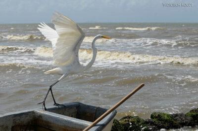 p178-Livingstone-nad Oceanem - czapla
