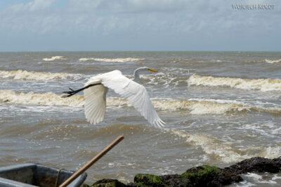 p179-Livingstone-nad Oceanem - czapla