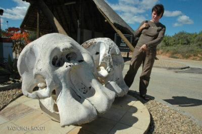 SA15006-Addo Elephant-Gate