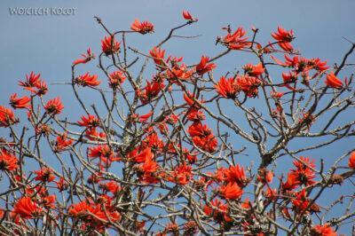 SA15193-Drzewo koralowe